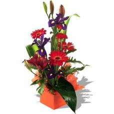 Assorted Arrangement Iris, gerbera and lily