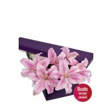 4 Oriental Lilies Presentation Box